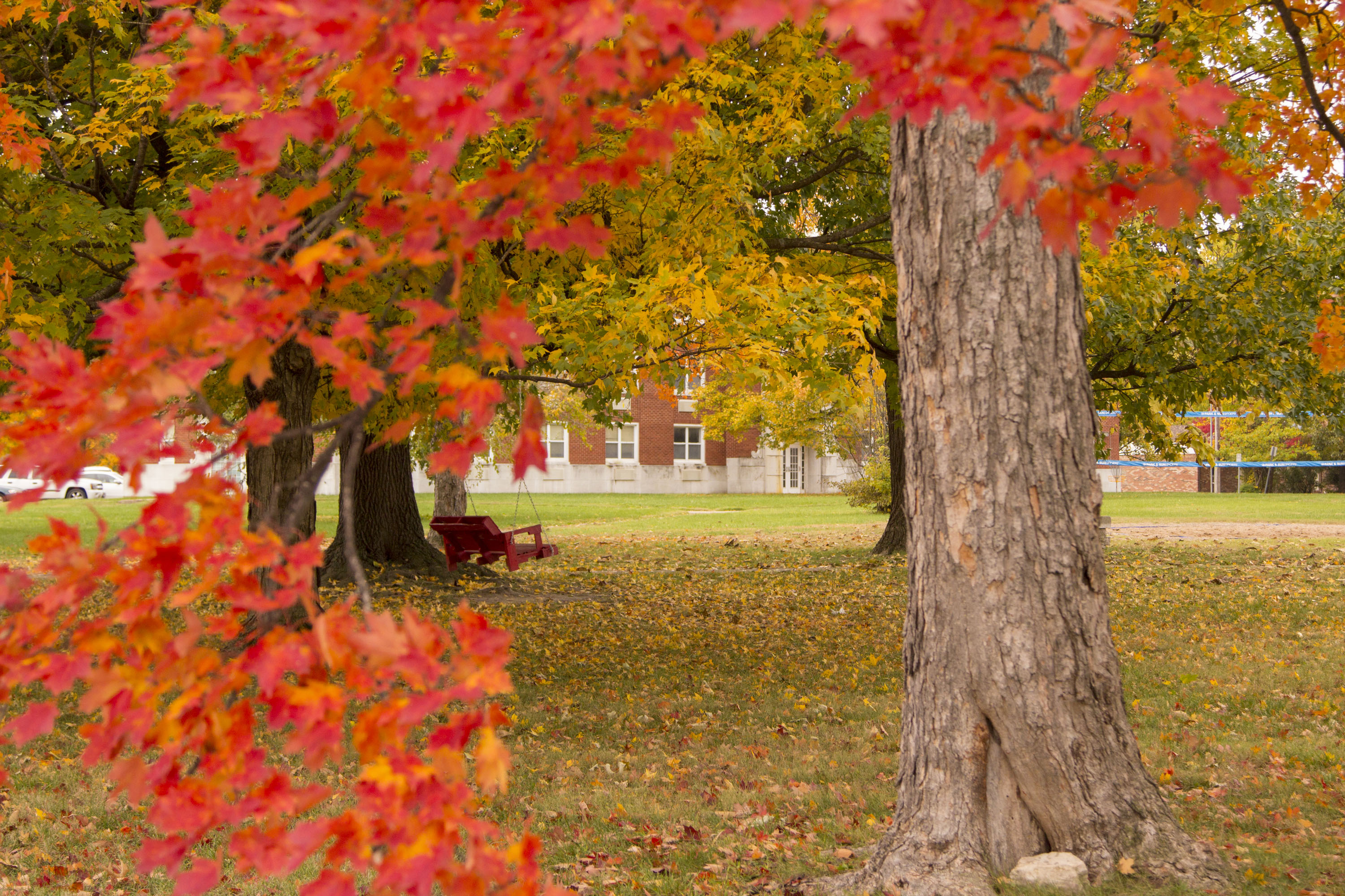 fall leaves with campus building in background